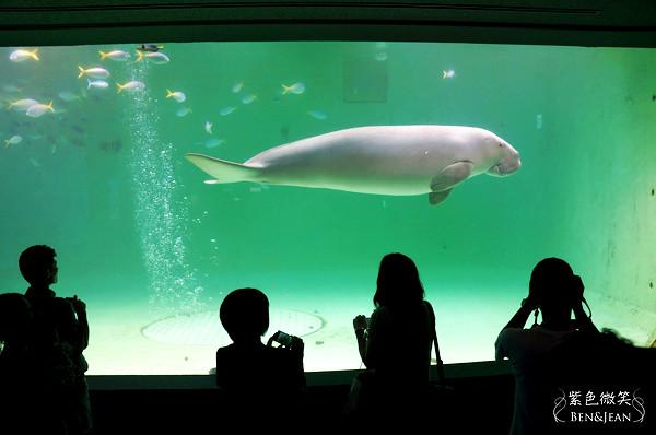 ▋日本中部地方▋三重.鳥羽水族館~來看鎮館之寶美人魚吧 @紫色微笑 Ben&Jean 饗樂生活