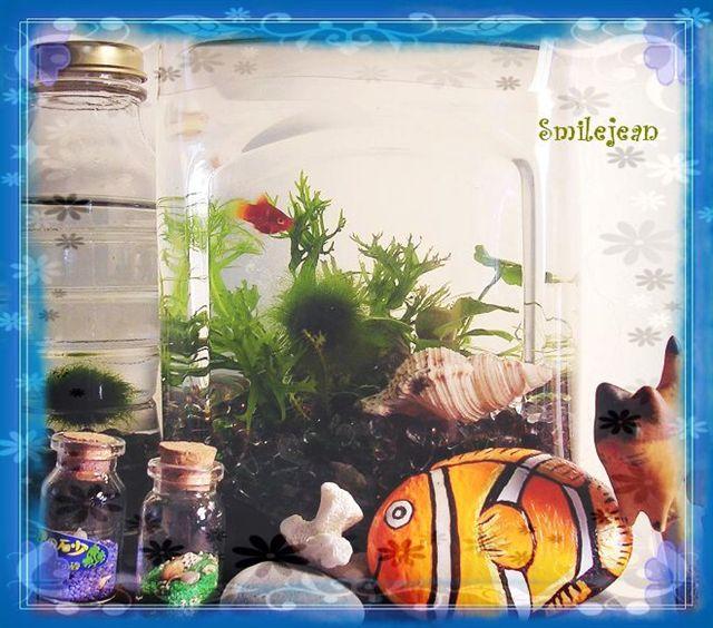 [養魚]DIY掌中魚缸 @紫色微笑 Ben&Jean 饗樂生活
