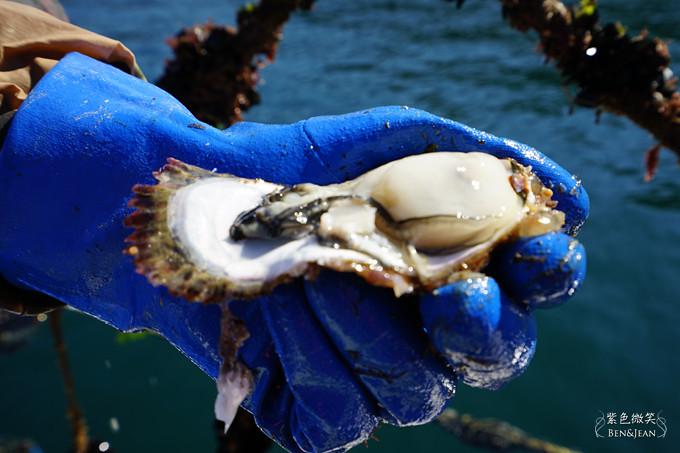 日本宮城縣~三陸海岸出海採牡蠣,感受食材新鮮好滋味 @紫色微笑 Ben&Jean 饗樂生活