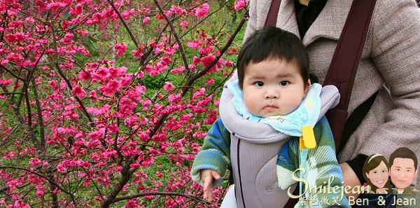 ▋宜蘭賞花▋小礁溪結龍橋櫻花~賞花秘境 @紫色微笑 Ben&Jean 饗樂生活